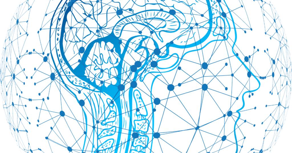 drawing of profile of human brain